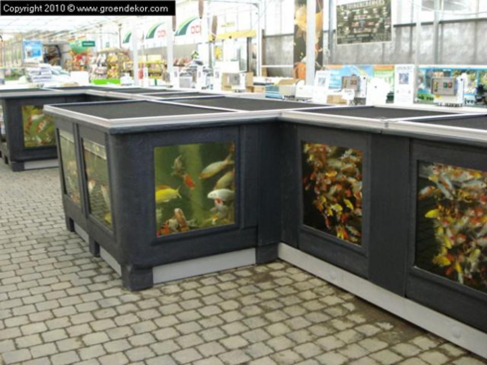 Vijver - De vissen bij Groendekor Vijver – De vissen bij Groendekor Amenagement Bassin Poisson Exterieur 960x600