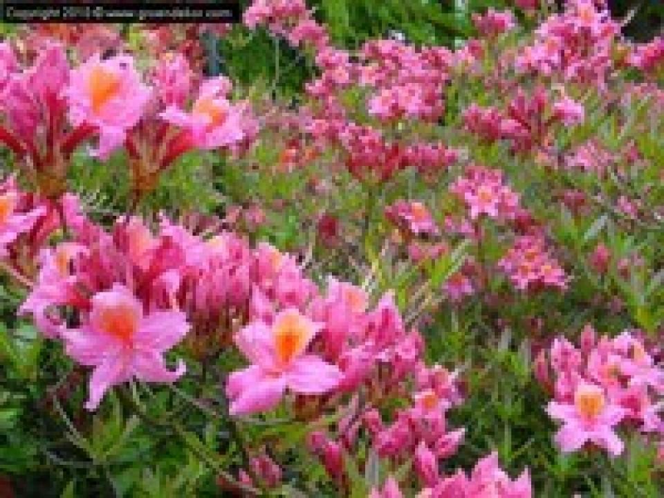 Groendekor Sint-Pieters-Leeuw Tuinplanten bij Groendekor Planter Vivaces Fleurs Annuelles Halle 1 960x600