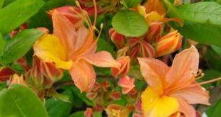 Planter Vivaces, Fleurs Annuelles, Halle Groendekor Sint-Pieters-Leeuw Tuinplanten bij Groendekor Planter Vivaces Fleurs Annuelles Halle 310x165