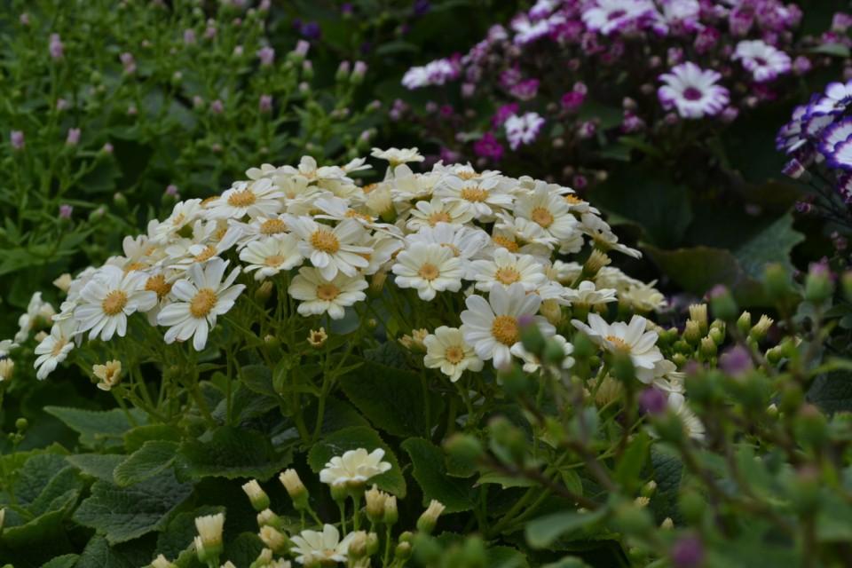 Boomkwekerij Vaste Planten België Bij boomkwekerij Abeels-Garden in België vindt u alle Soorten vaste Planten vivace 1 960x600