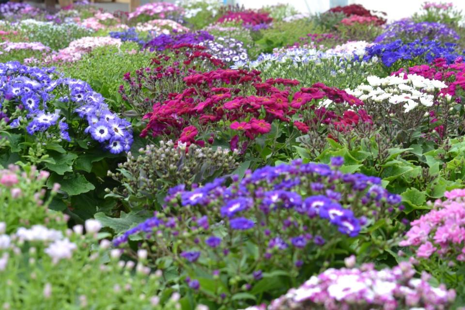 Boomkwekerij Vaste Planten België Bij boomkwekerij Abeels-Garden in België vindt u alle Soorten vaste Planten vivace4 960x600