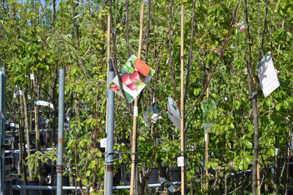 Fruitbomen in pot Groendekor Ukkel fruitbomen in pot groendekor sint-pieters-leeuw Fruitbomen in pot Groendekor Sint-Pieters-Leeuw fr3 960x600
