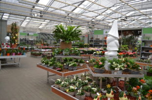 Tuincentrum Groendekor Ukkel tuincentrum groendekor Sint-Pieters-Leeuw Tuincentrum Groendekor Sint-Pieters-Leeuw j1 310x205