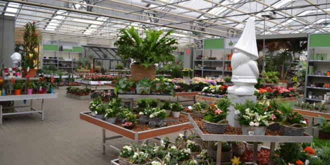 Tuincentrum Groendekor Ukkel tuincentrum groendekor Sint-Pieters-Leeuw Tuincentrum Groendekor Sint-Pieters-Leeuw j1 660x330