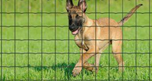 Hoe jouw huisdier beschermen in je tuin? plantanet: betafence Pantanet: Betafence 225705S 1BEKA 1 310x165