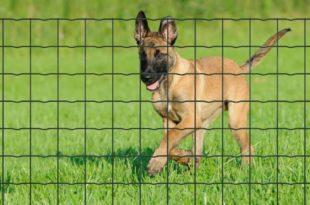 Hoe jouw huisdier beschermen in je tuin? plantanet: betafence Pantanet: Betafence 225705S 1BEKA 1 310x205