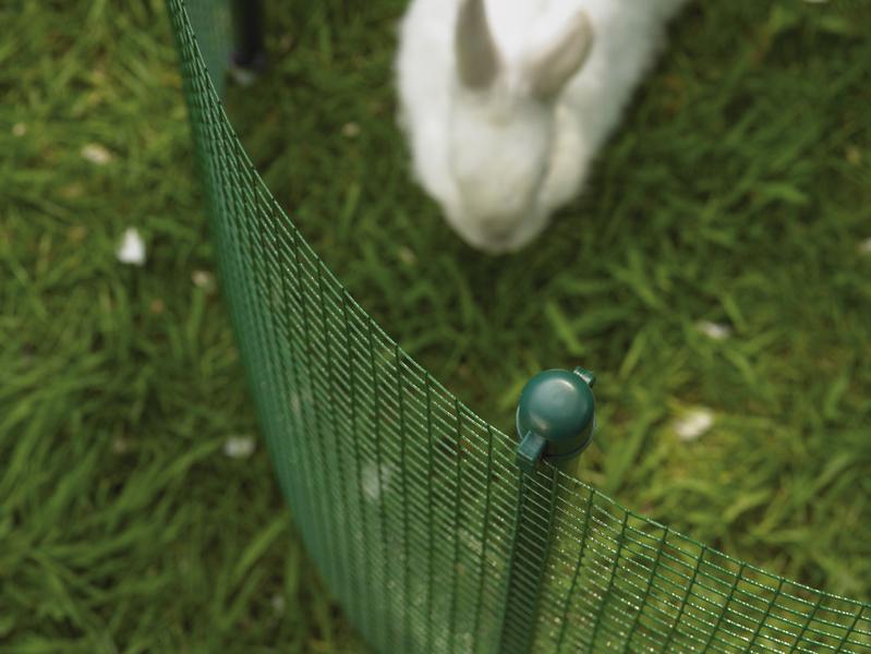 hoe jouw huisdier beschermen in je tuin? Hoe jouw huisdier beschermen in je tuin? BETAFENCE 076197 960x600